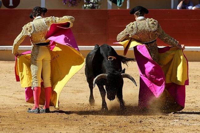 đấu bò Semana Grande