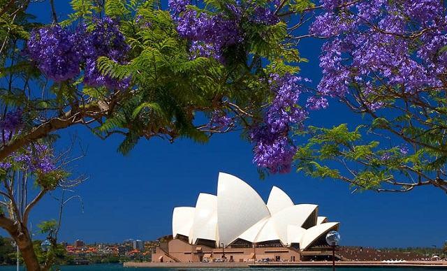 Mùa xuân tuyệt vời ở Sydney